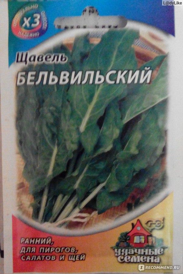 Как сажать щавель семенами дома 34