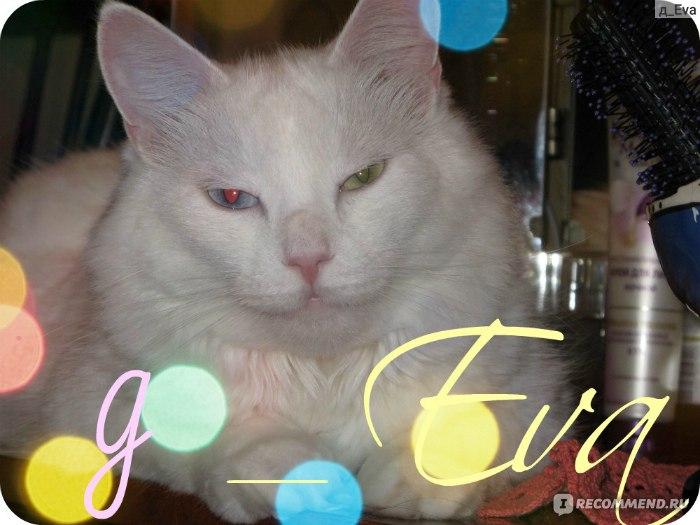 после кастрации кот лижет яйца: