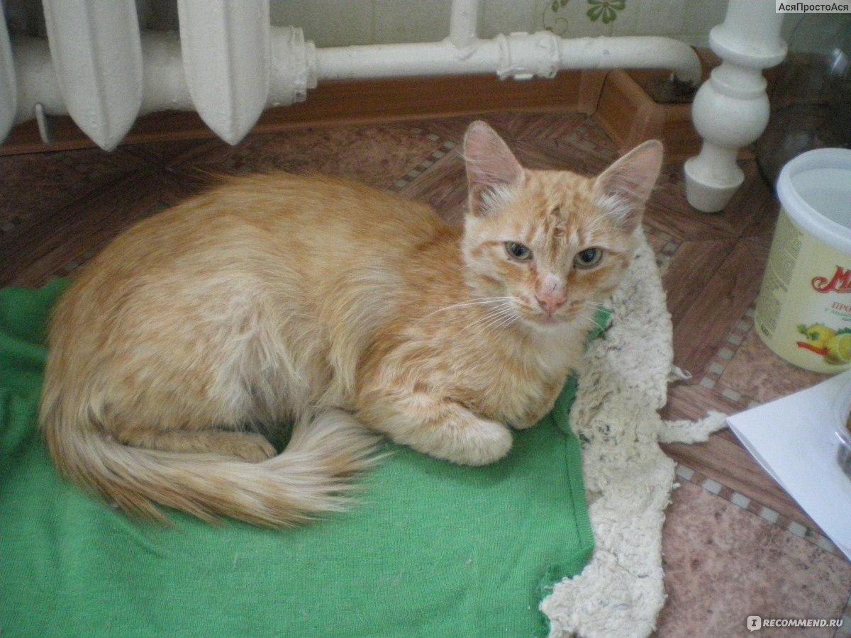 Стерилизованная кошка и некастрированный кот в одной квартире
