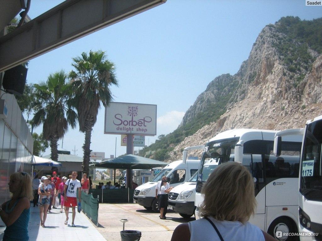 дачных гиды пегас туристик в тунисе фото специально