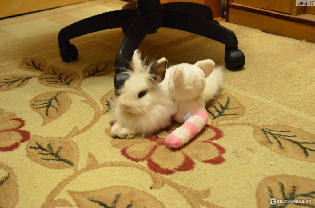 Кролик царапает диван и срет