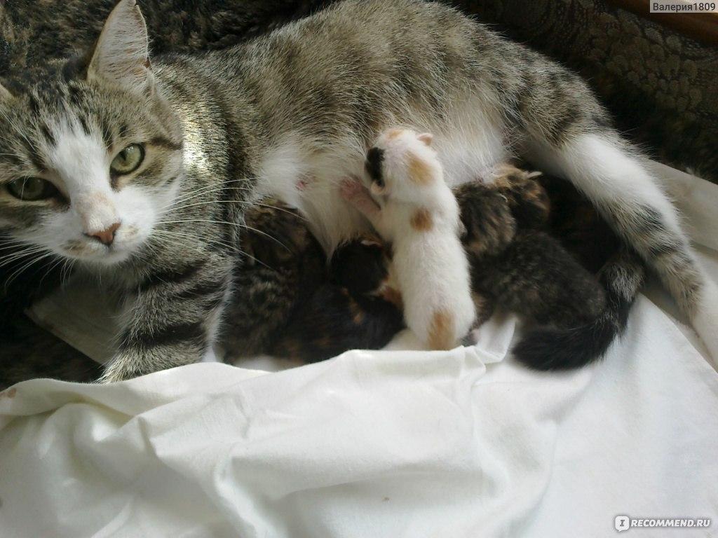 Кот не любит мама