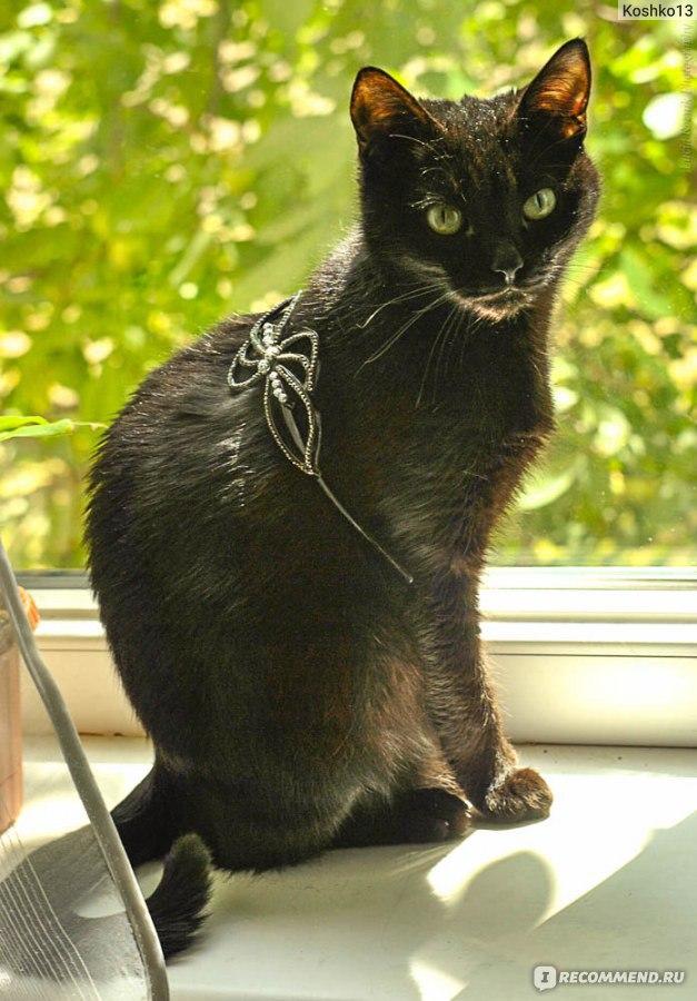 нонестрон 10 для кошек инструкция - фото 10