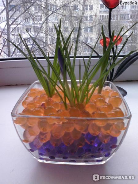 Растения для выращивания в гидрогеле 76