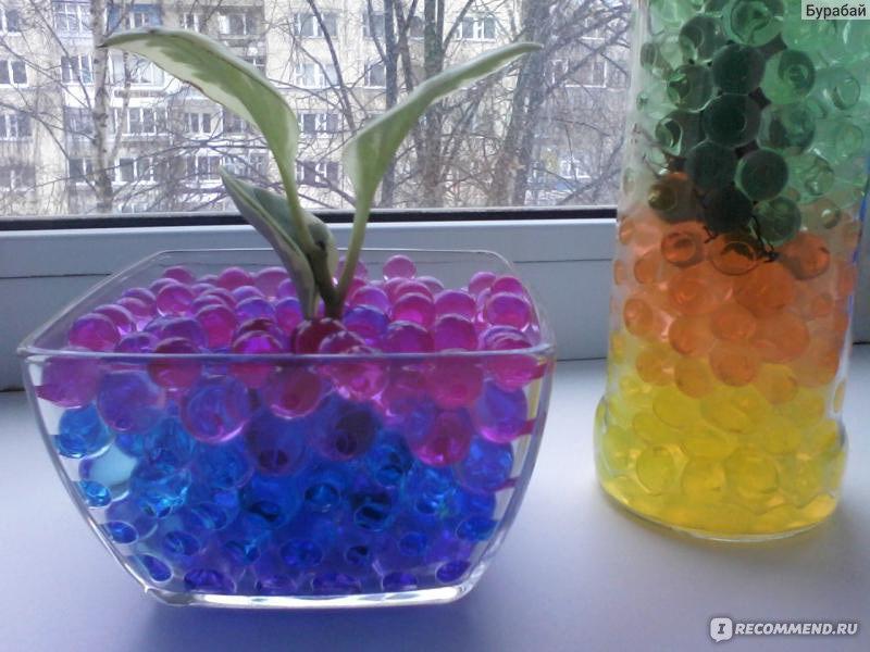 Какие растения сажать в гидрогель 31