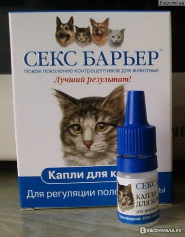 Секс барьер для кошек это вредно