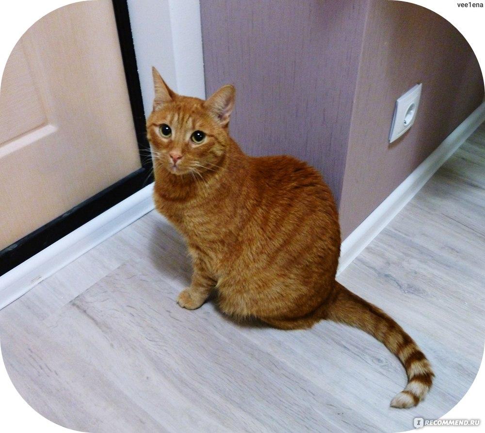 Закрытый туалет для кошек: обзор моделей и рекомендации по выбору