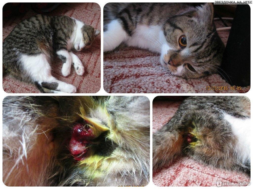 Кастрация кота на дому в новосибирске