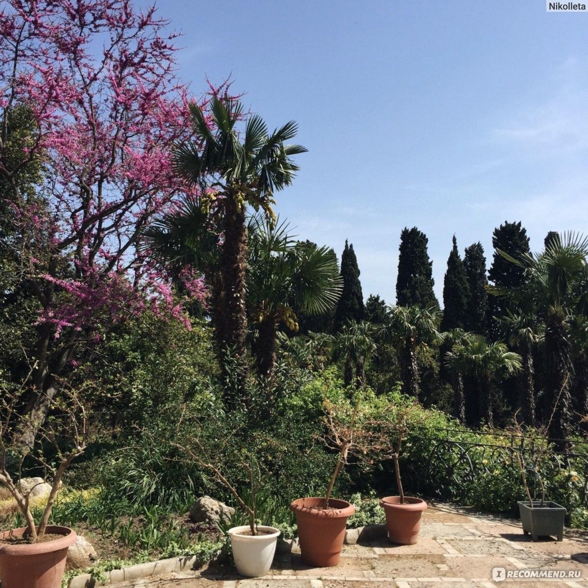 Купить косметику никитского ботанического сада декоративная косметика revlon где купить