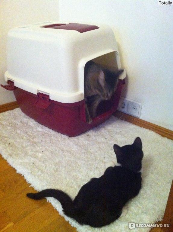 Туалет-домик для кошек своими руками фото 69