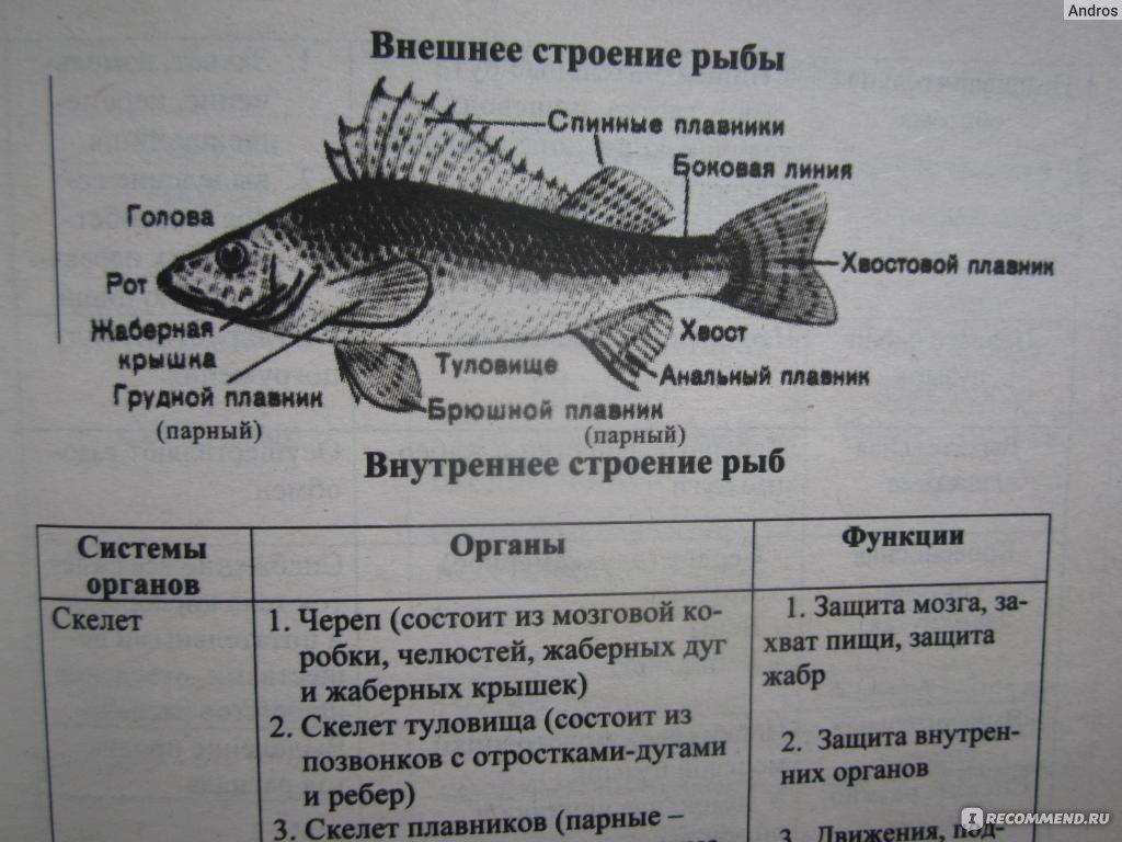 Онищенко а. В. Биология в таблицах и схемах [pdf] все для студента.