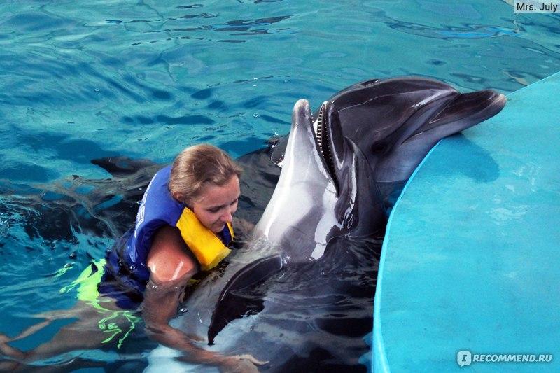 Дельфин салоу