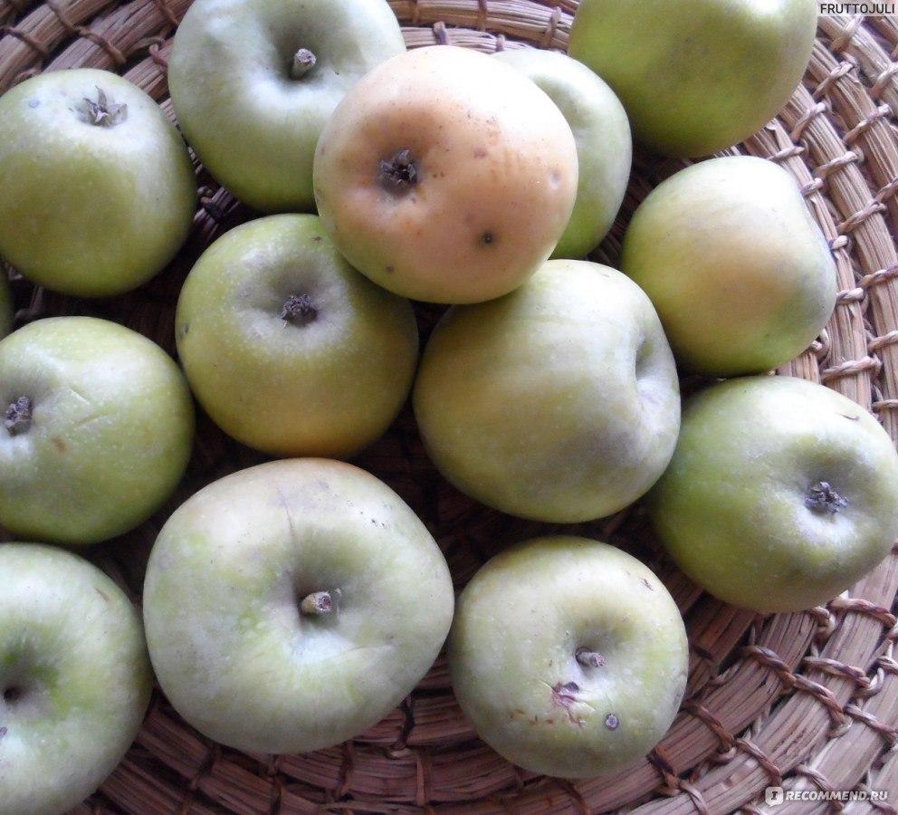 Яблоки в домашних условиях простой рецепт 210