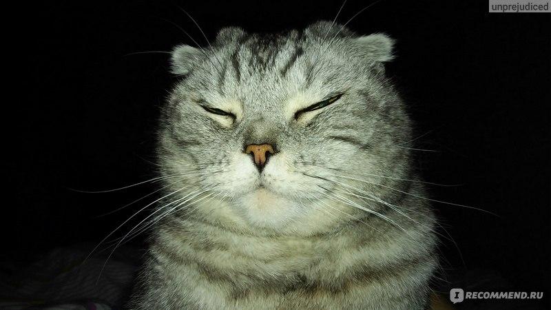 Раствор марганцовки для котов