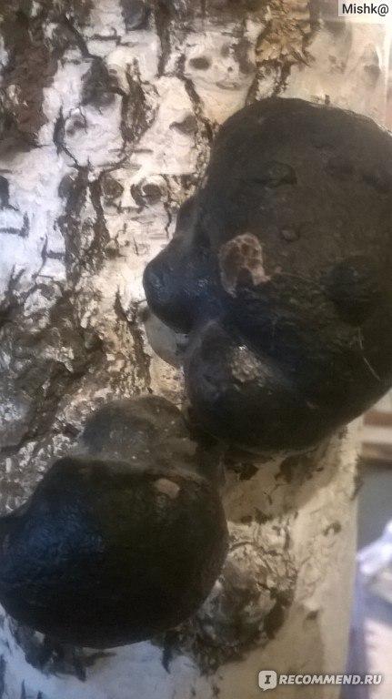 чистке от паразитов пижмой полынью гвоздикой
