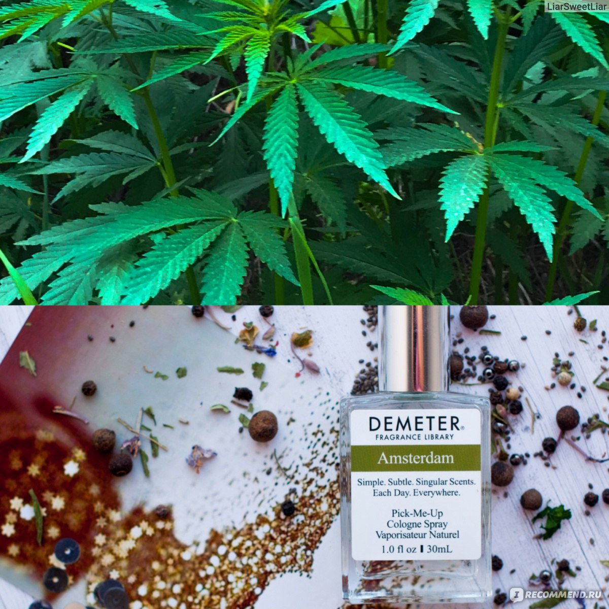 Где купить семена марихуаны в амстердаме почему в россии нельзя курить марихуану