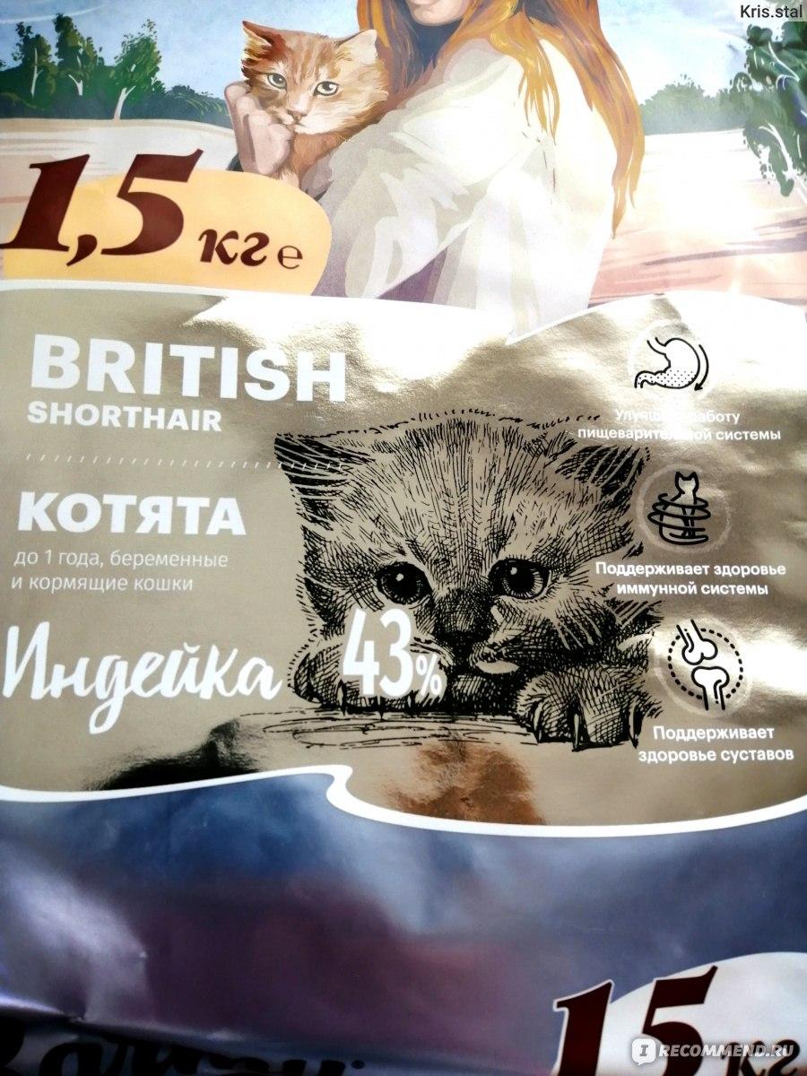 Картинка котенка кошка Глаза носа морды Взгляд животное 3840x2400 | 1200x900