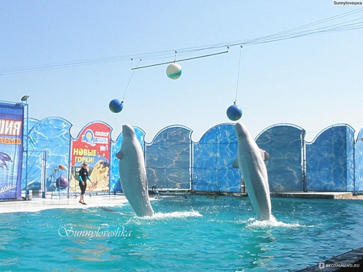 Фото пляжа дельфин в ялте