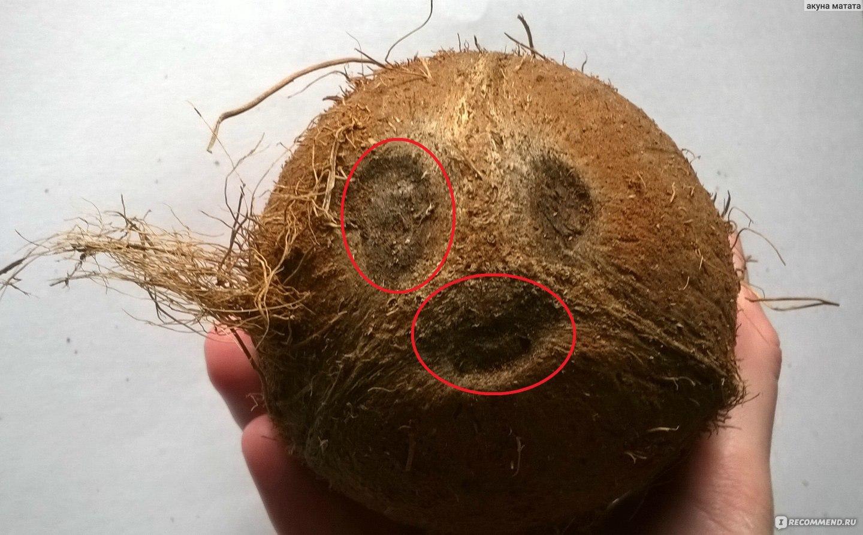 Как расколоть кокос в домашних условиях: инструкция 22