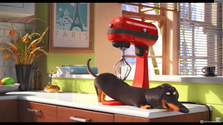 Тигр мультфильмы смотреть онлайн макс стил того, что Винкс
