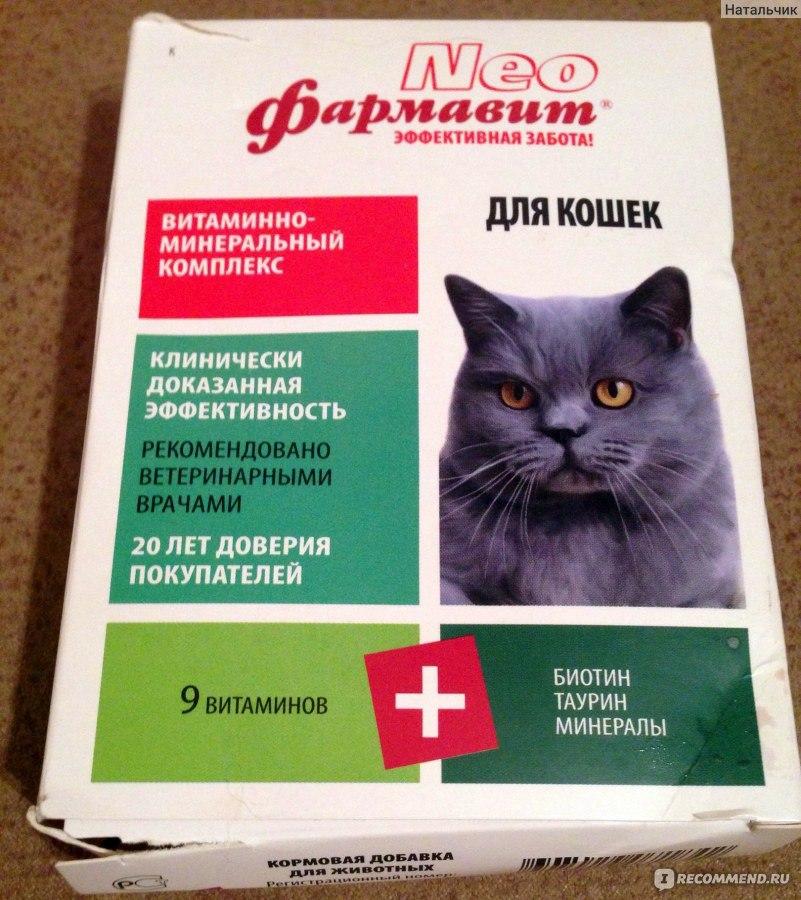 дому заполнению какие для котят хорошие витамины подключиться интернету загородном