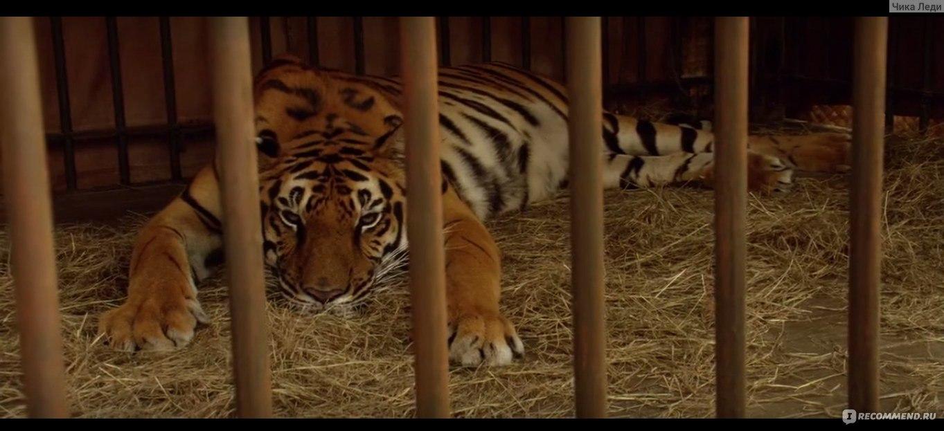 Тигр жив (2018) смотреть онлайн фильм бесплатно в хорошем