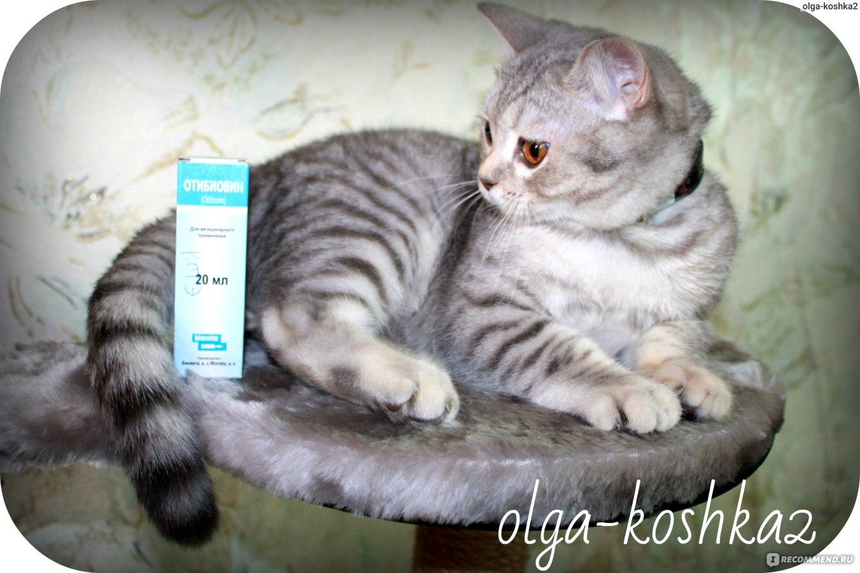 сера в ушах у кошки в картинках