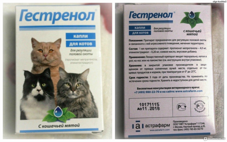 Лекарства в каплях для кошек в периуд сексуального желания