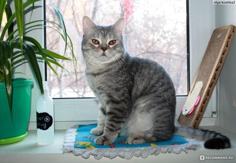 Препарат для подавление сексуального влечения у котов