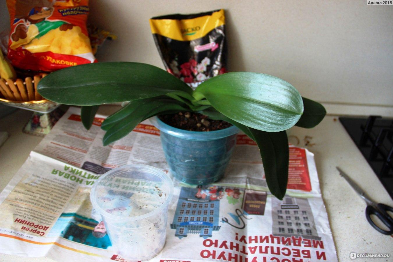 Субстрат для орхидеи своими руками 886