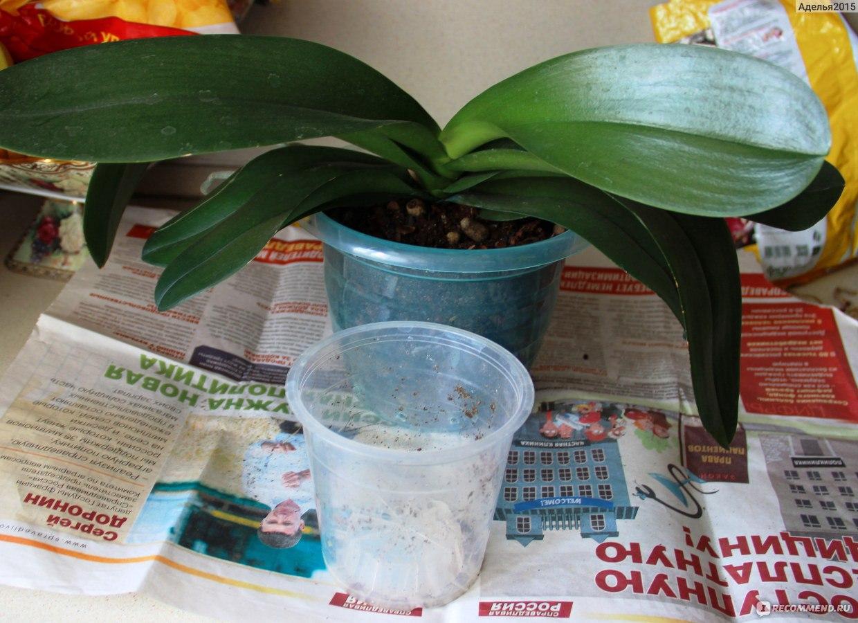 Пересадка фаленопсиса в домашних условиях пошагово