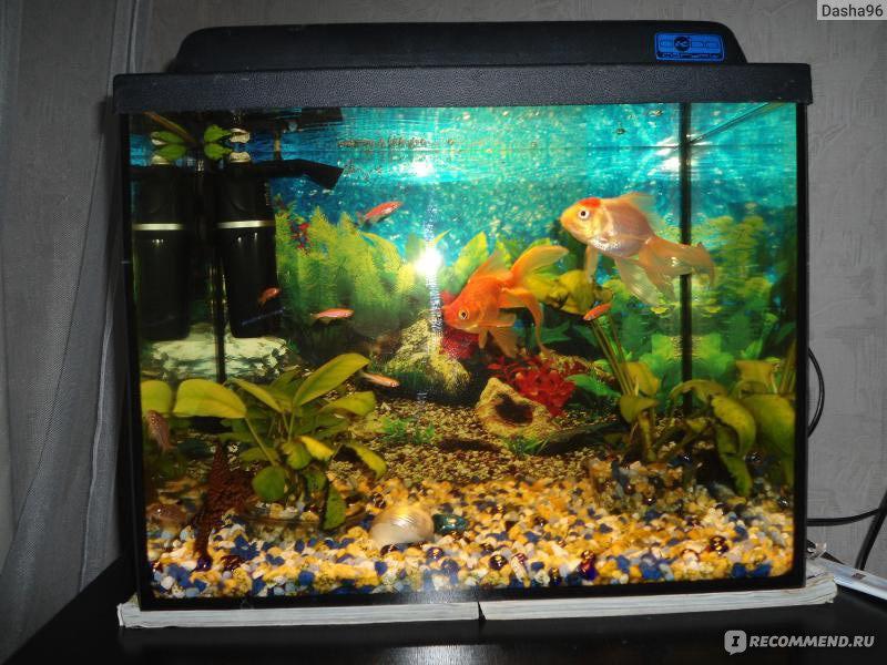 скачать игру рыбка обжора полная версия - фото 9