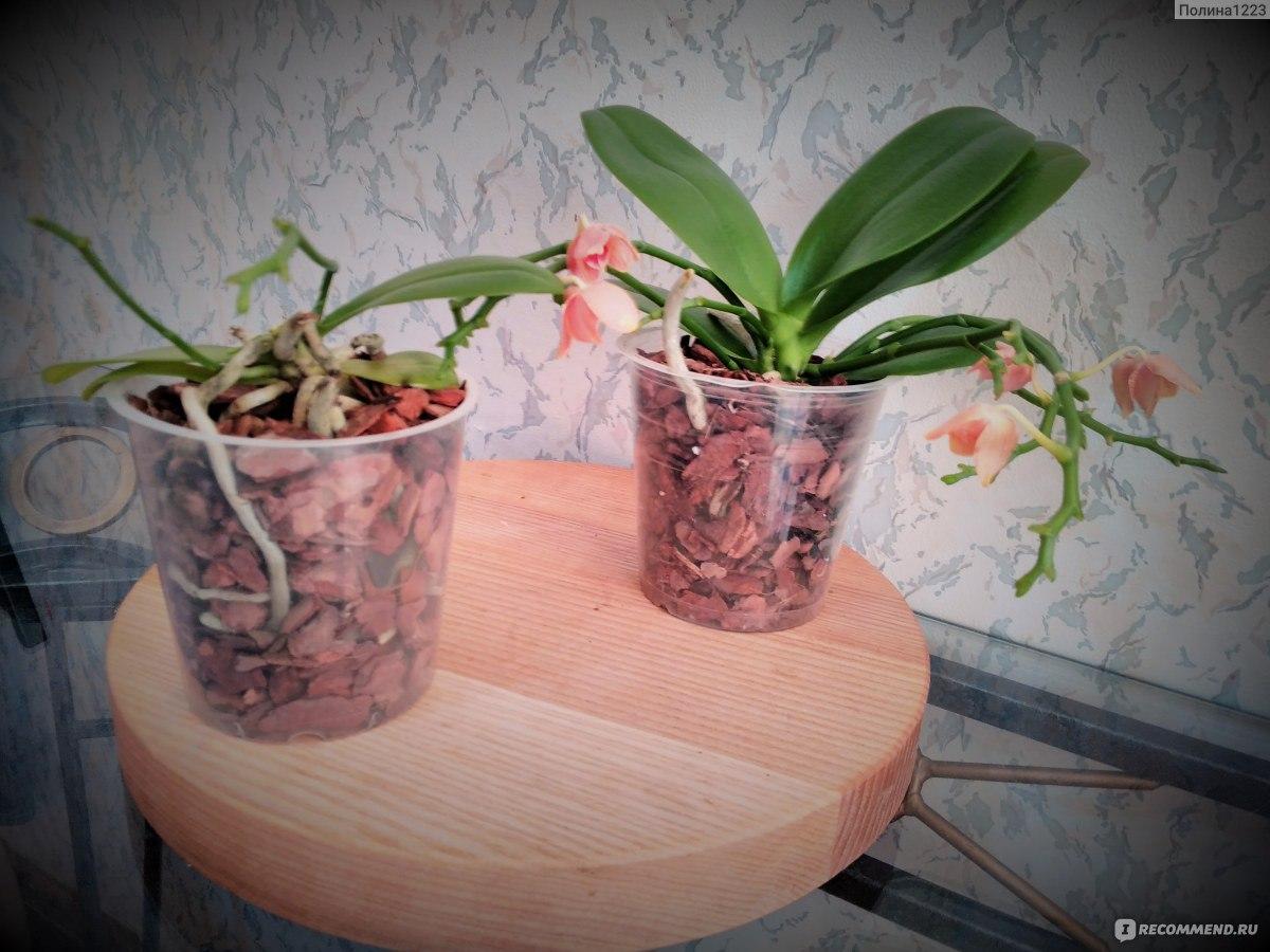 трудилась картинки орхидеи уход и размножение в домашних условиях фото простой делается