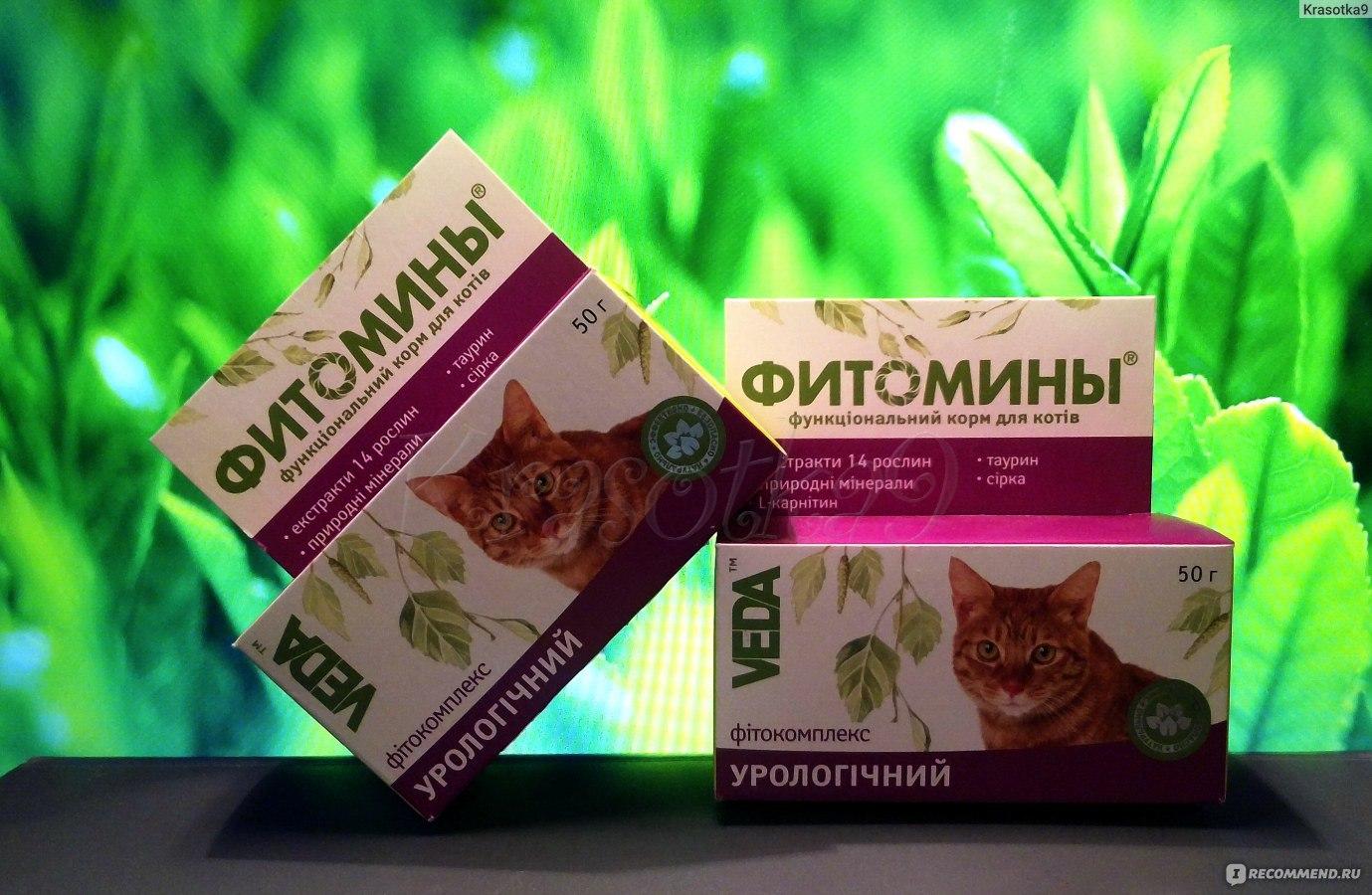 Истории болезни котов