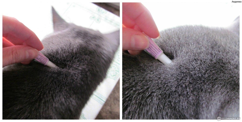 Как у домашнего кота вывести блох в домашних условиях 193