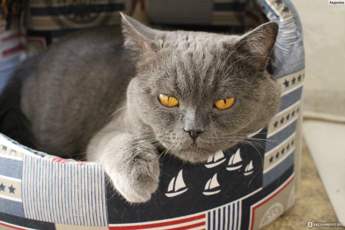 Как долго можно давать коту фуросемид