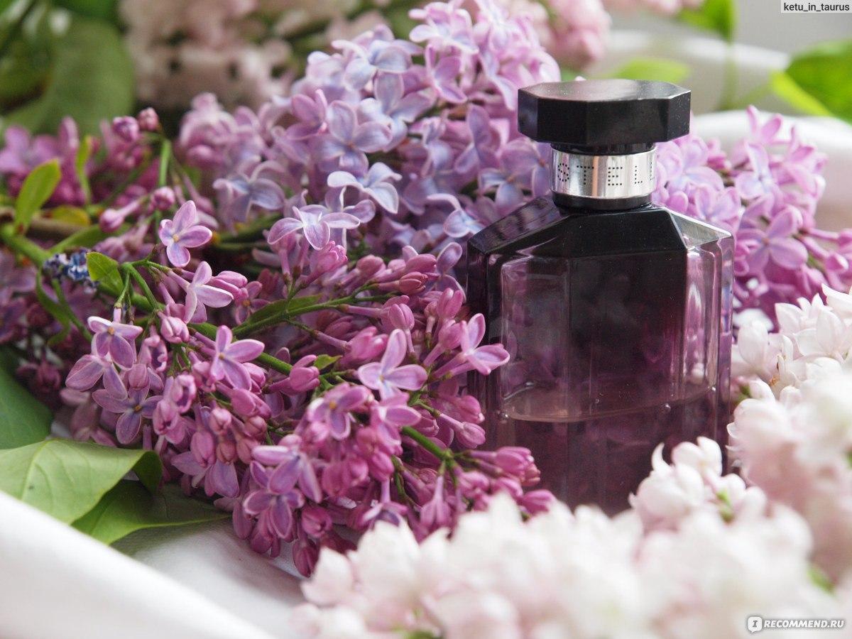 Цветы с ароматом фото