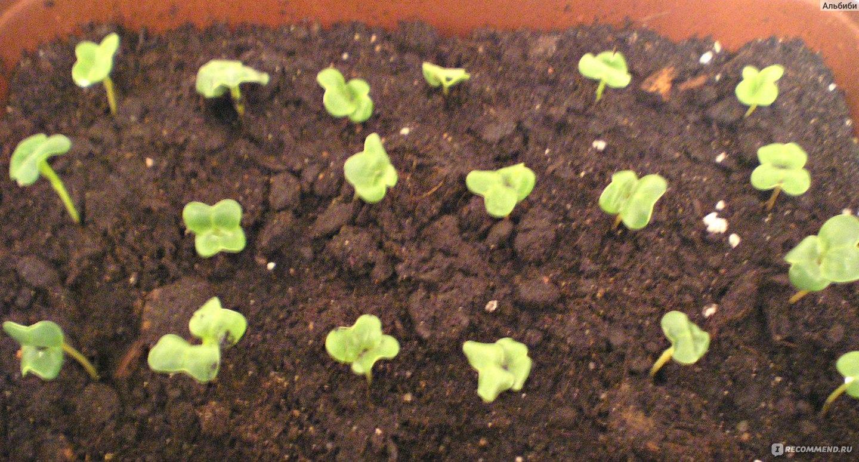 Как быстро прорастить фасоль: основные правила проращивания 26