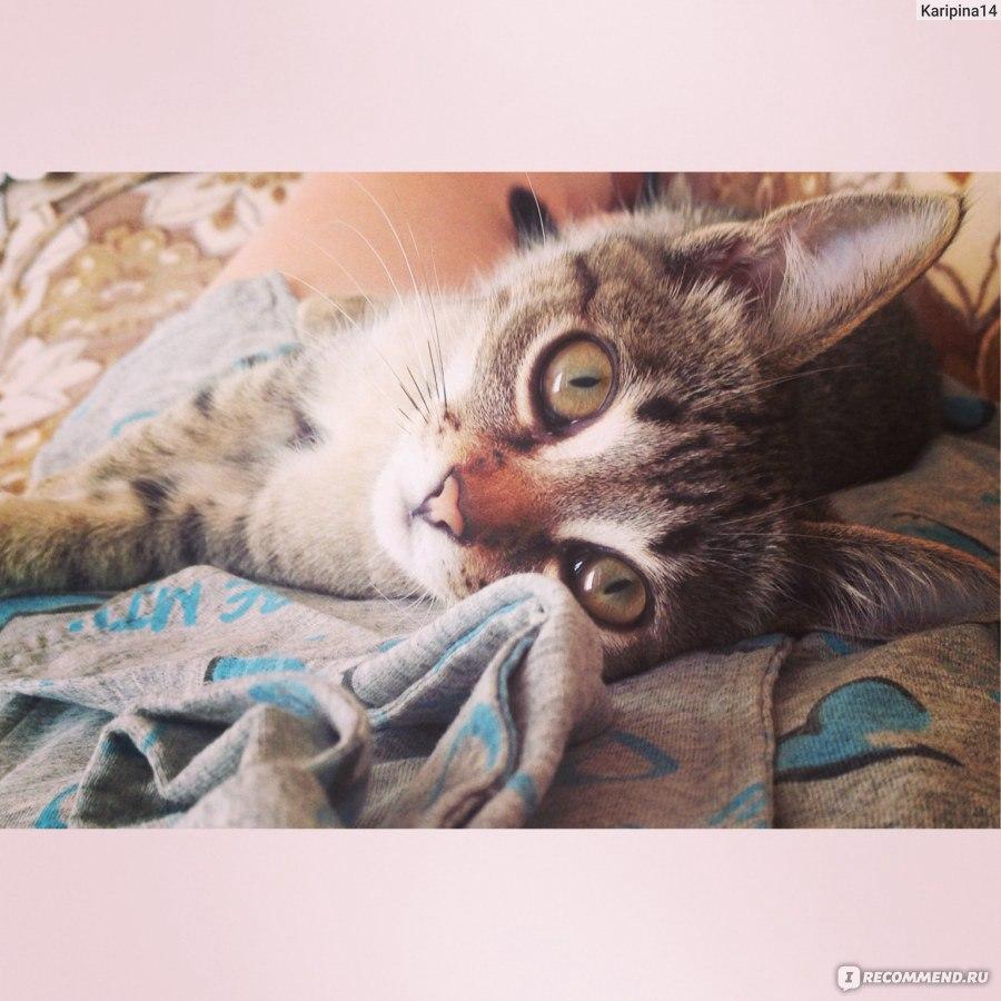 Но-шпа уколы котам