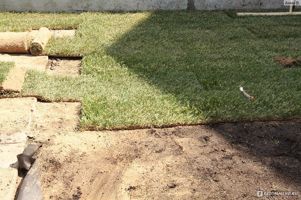 Как сажать рулонный газон осенью 61