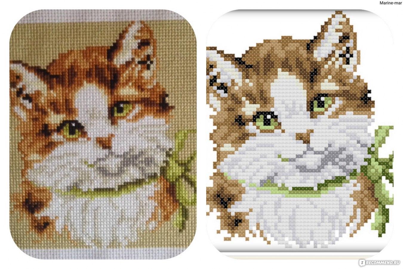 Вышивка крестом вислоухая кошка