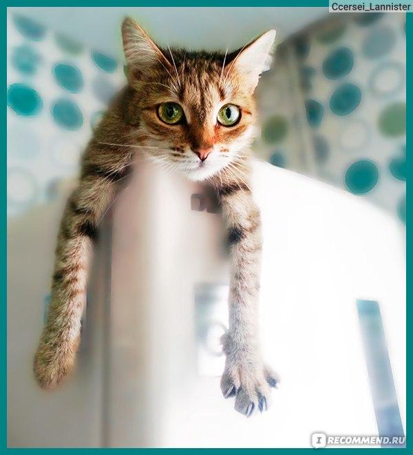 Секс барьер для кошек и котов одно и тоже