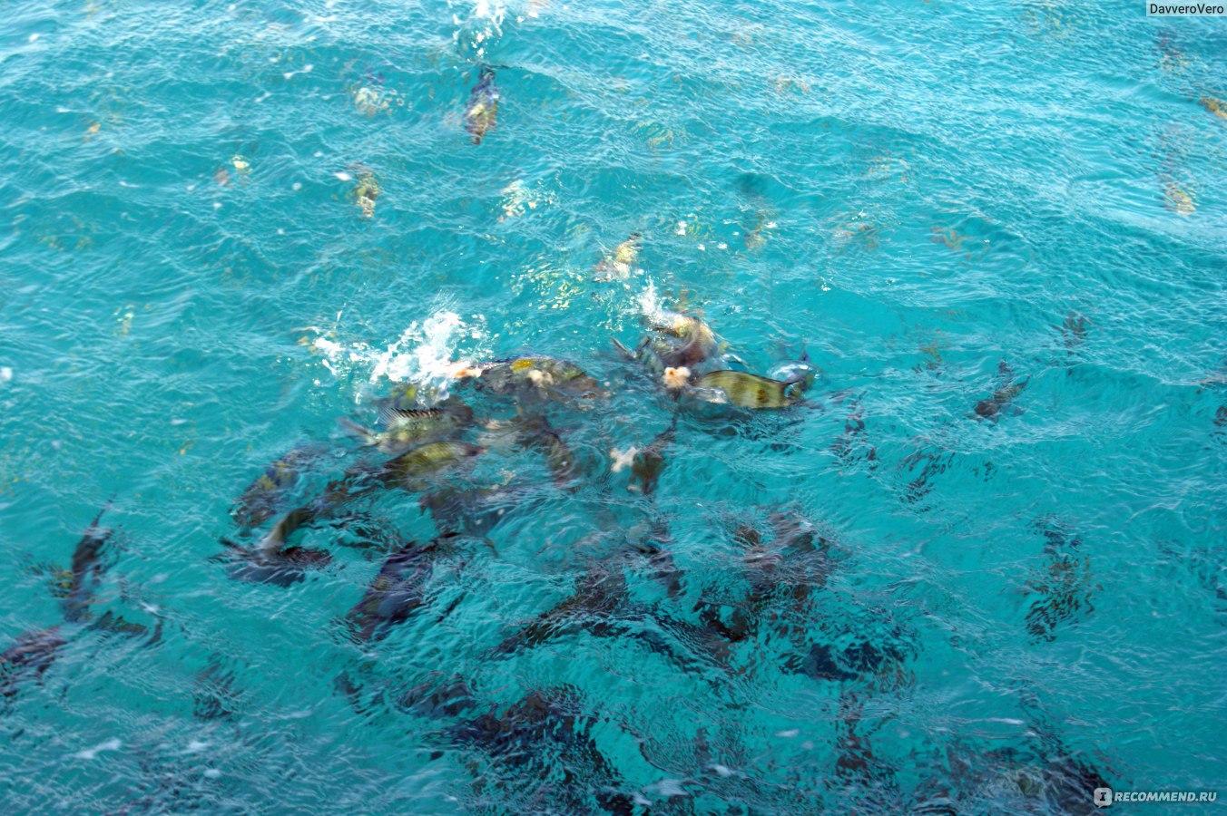 красное море псориаз отзывы