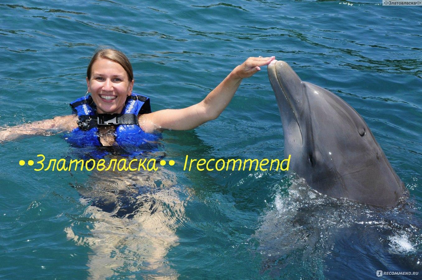 Впечатление в подарок с дельфинами
