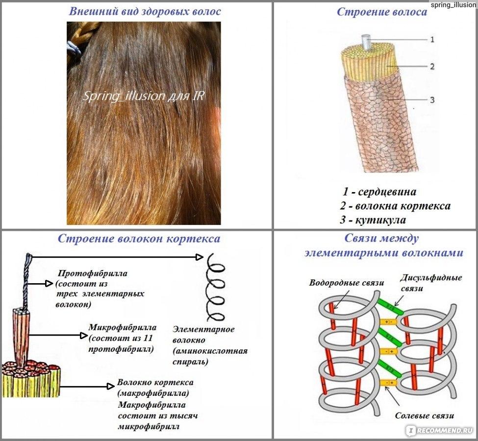 схема восстановления волос от трихолога