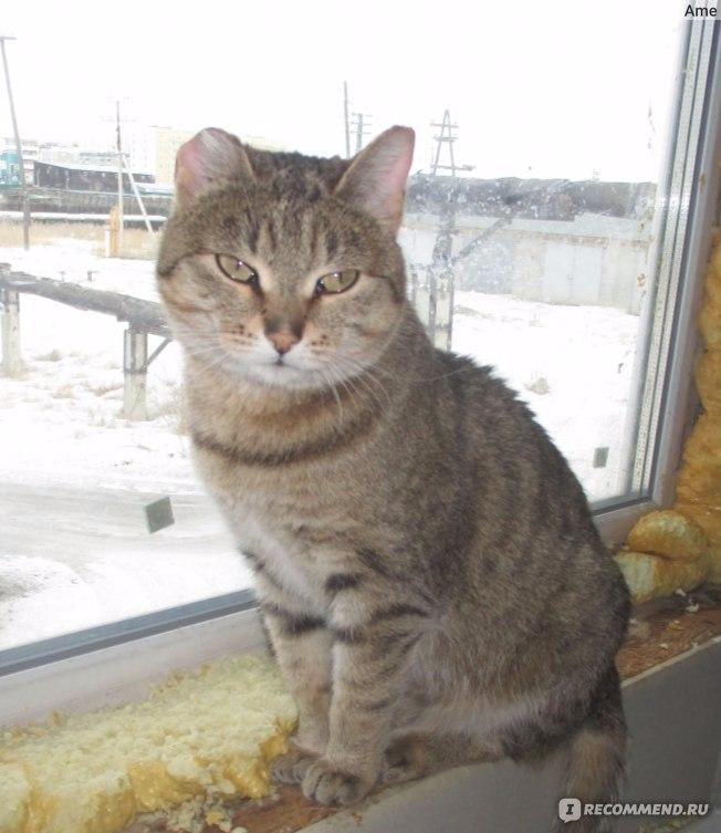 Был у бабушки серенький кот уж