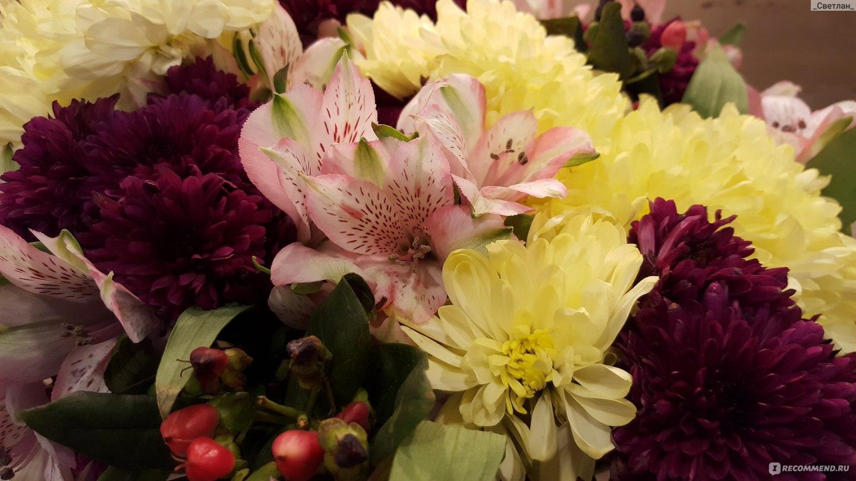 подкормка для срезанных цветов chrysal инструкция