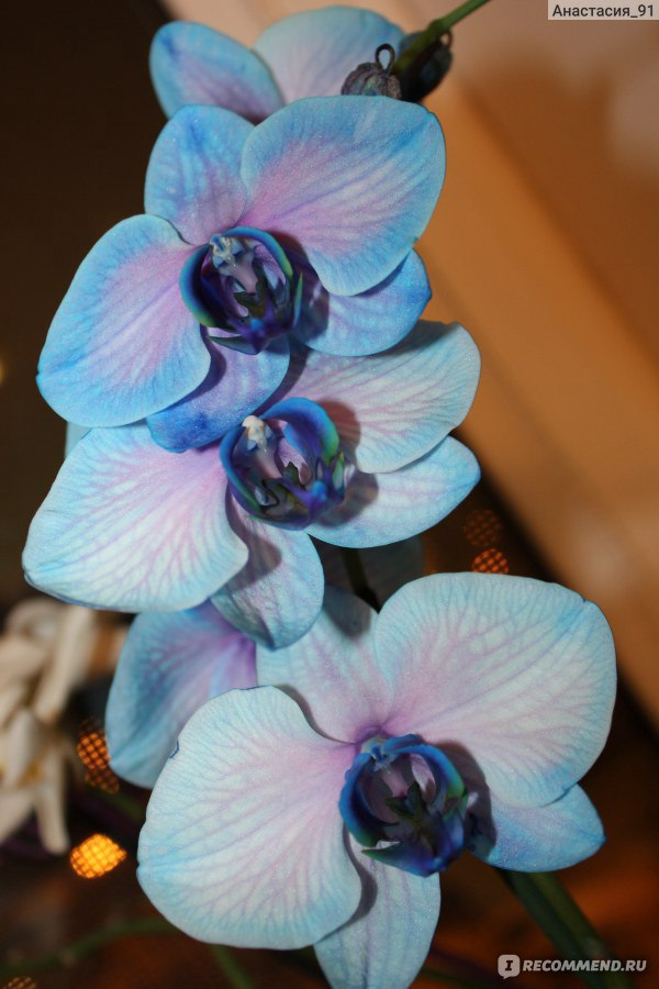 Леруа мерлен орхидея цветок