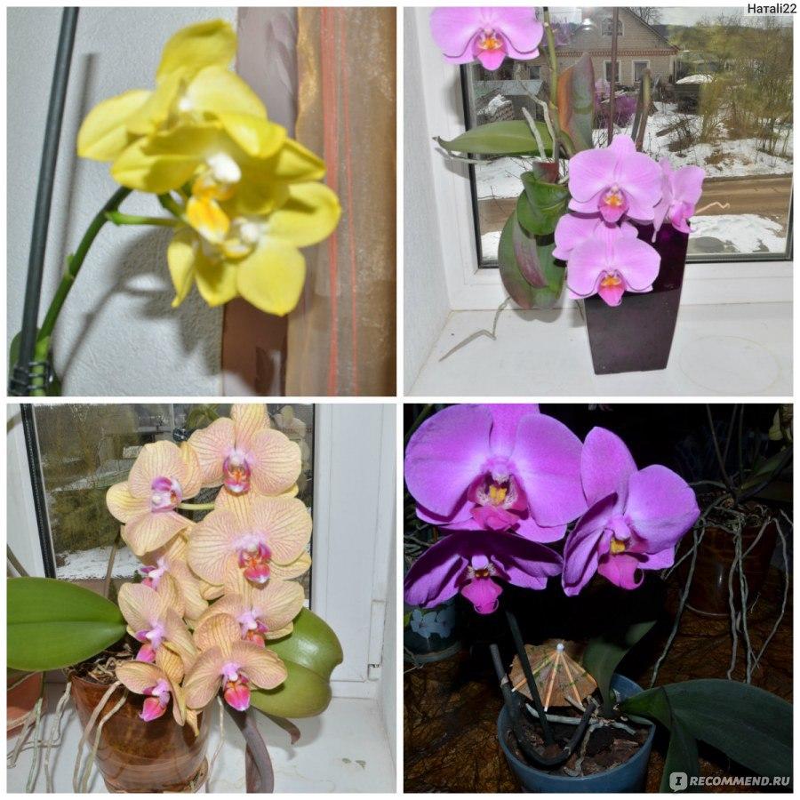 Как ухаживать за орхидеями в домашних условиях  251