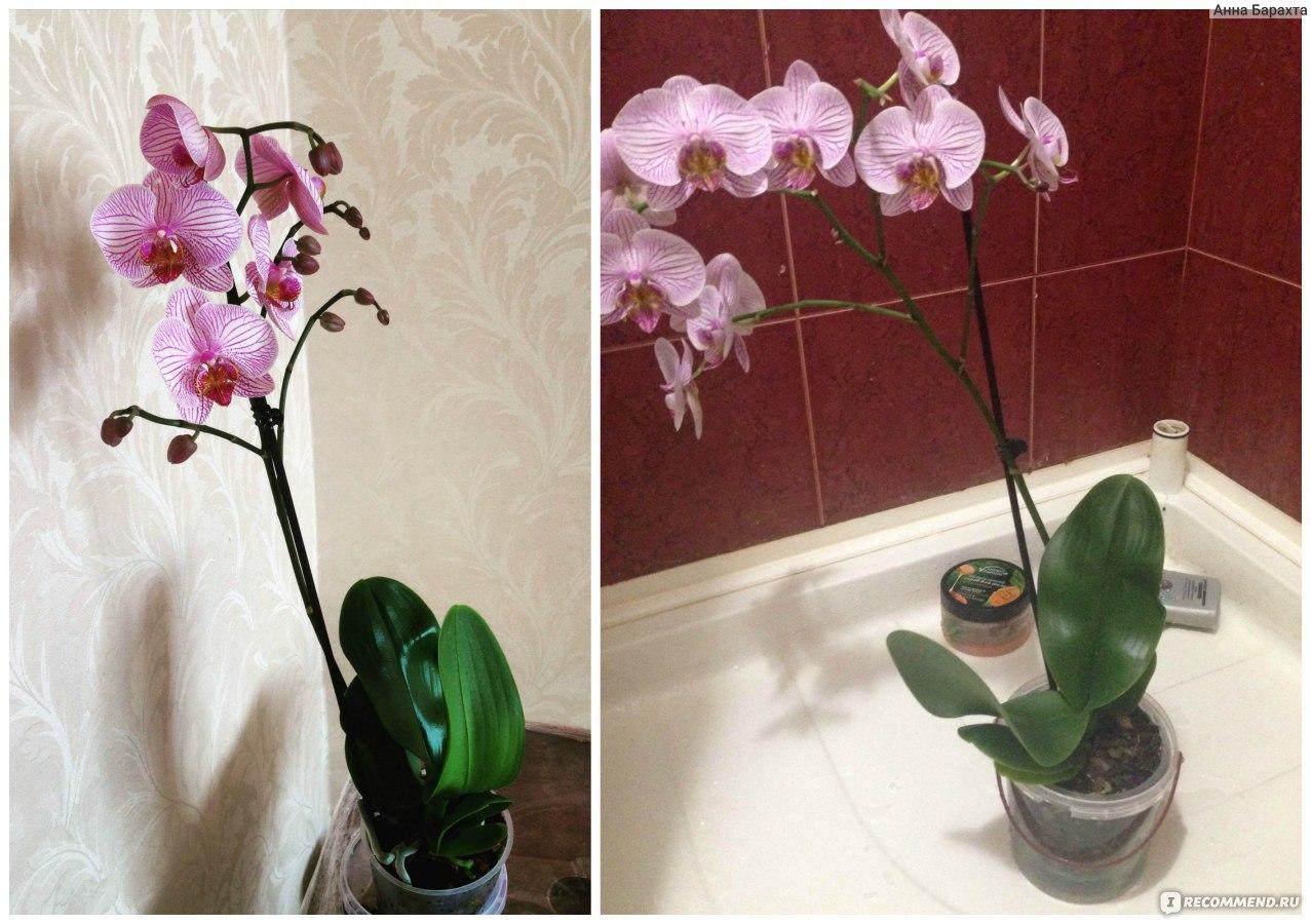 В орхидеи завелись белые жучки что делать фото